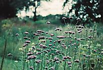 Gartenimpressionen-72dpi-003