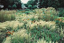 Gartenimpressionen-72dpi-004