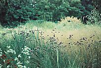 Gartenimpressionen-72dpi-007