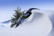 Fichtelgebirge - Schneewehe