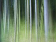 Wald10 Gabi
