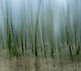 Wald13 Gabi