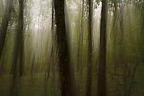 Wald1 Gabi