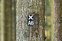 Wald2 Gabi