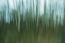 Wald4 Gabi