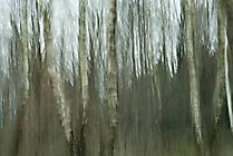 Wald6 Gabi
