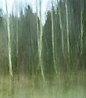 Wald8 Gabi