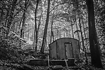 Im Wald bei Waldbröhl