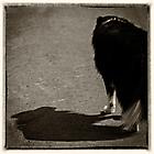 Schattenhund 1 sw