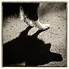 Schattenhund 2 sw