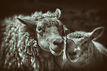 Mutter&Kind