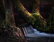 Des Waldes dunkel zieht