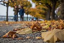 Herbstpromenade