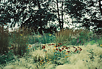 Gartenimpressionen-72dpi-001