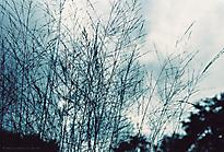 Gartenimpressionen-72dpi-002
