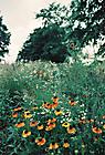 Gartenimpressionen-72dpi-005