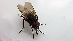 Mach die Fliege