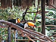 Vögel2