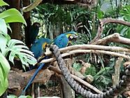 Vögel5