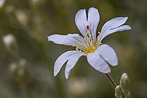 Besuch auf Blüte