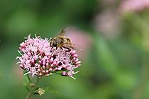 Besuch auf Blüte 2