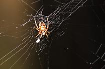 Spinne beute