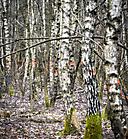 Wald14 Gabi