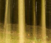 Wald3 Gabi
