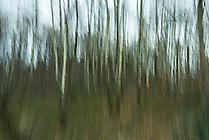 Wald5 Gabi