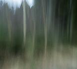 Wald9 Gabi