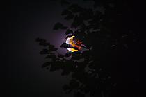 Mondfinsternis im Garten 2018