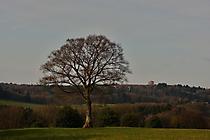 BAUM vor Bäumen