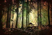 im Wald HM