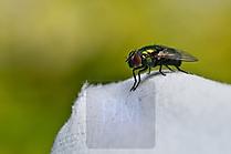 noch eine Fliege