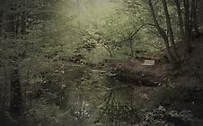 Lauschiges Plätzchen im Wald
