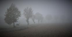 Nebel - Sommerhausen